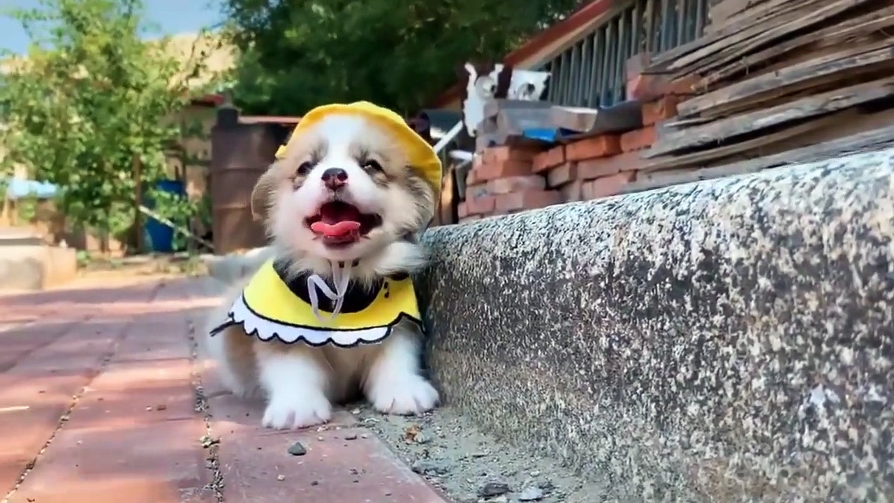 Cute Little Puppies Funny